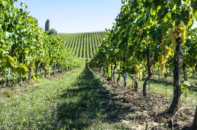 McLaren Vale Winery Tour